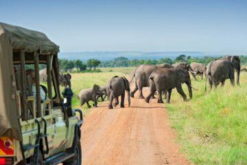 African Safaris, African Safari, African Safari Tours, African Safari Holidays, African safari travel, Kenya safari tours, Tanzania safari tours, Uganda safari tours, Rwanda safari tours, African tour safari, tour agency in kenya, travel operator in nairobi, travel agency in nairobi, mt kenya, mt kenya climbing, mountain climbing, safari, maasai mara safari, tour provider, adventure safari, safari provider, mount kilimanjaro tour safari, africa adventure safari tours, Africa tours and travels in kenya, tour and travel in kenya, travel safaris, tours and travels in kenya, east africa safari packages, kenya and tanzania safari packages, tour and travel in tanzania, tour and travel in uganda, Private Safaris East Africa, tailor made African safari, Private Safaris kenya, uganda, tanzania, rwanda, Luxury African safari tour, Masai Mara safari, Serengeti safari tours, Ngorongoro safari tours, Mt Kilimanjaro safari tours, Kenya safari tours, flight safari packages to Masai Mara, Go on safari to Kenya, Cheap luxury safaris, cheap africa safri tour, the best Luxury Safaris in Kenya, Tanzania Luxury Safari, Ngorongoro Crater package, best safari offer africa, Uganda safari tour, Lake Nakuru safari, Amboseli kenya safari, Mt Kilimanjaro africa safari, best Luxury Safaris in africa, affordable africa safari tour, cheap africa safari package, Kenya and Tanzania Safaris tours and travel, affordable East Africa Safaris tour, affordable africa honeymoon packages, cheap African flying safari tour packages, cheap east africa honeymoon packages